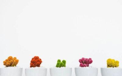 7 virtudes essenciais para o sucesso: AUTORRESPONSABILIDADE