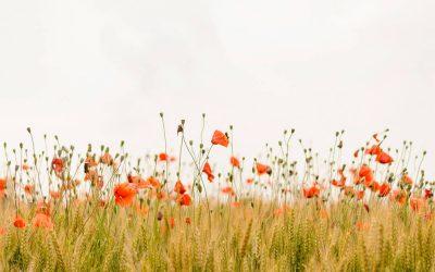 7 virtudes essenciais para o sucesso: HONRA