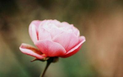 7 virtudes essenciais para o sucesso: PROPÓSITO