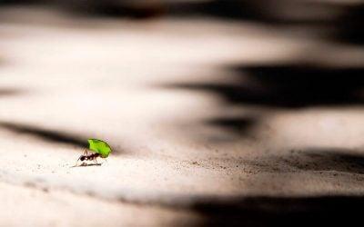 7 virtudes essenciais para o sucesso: SERVIÇO